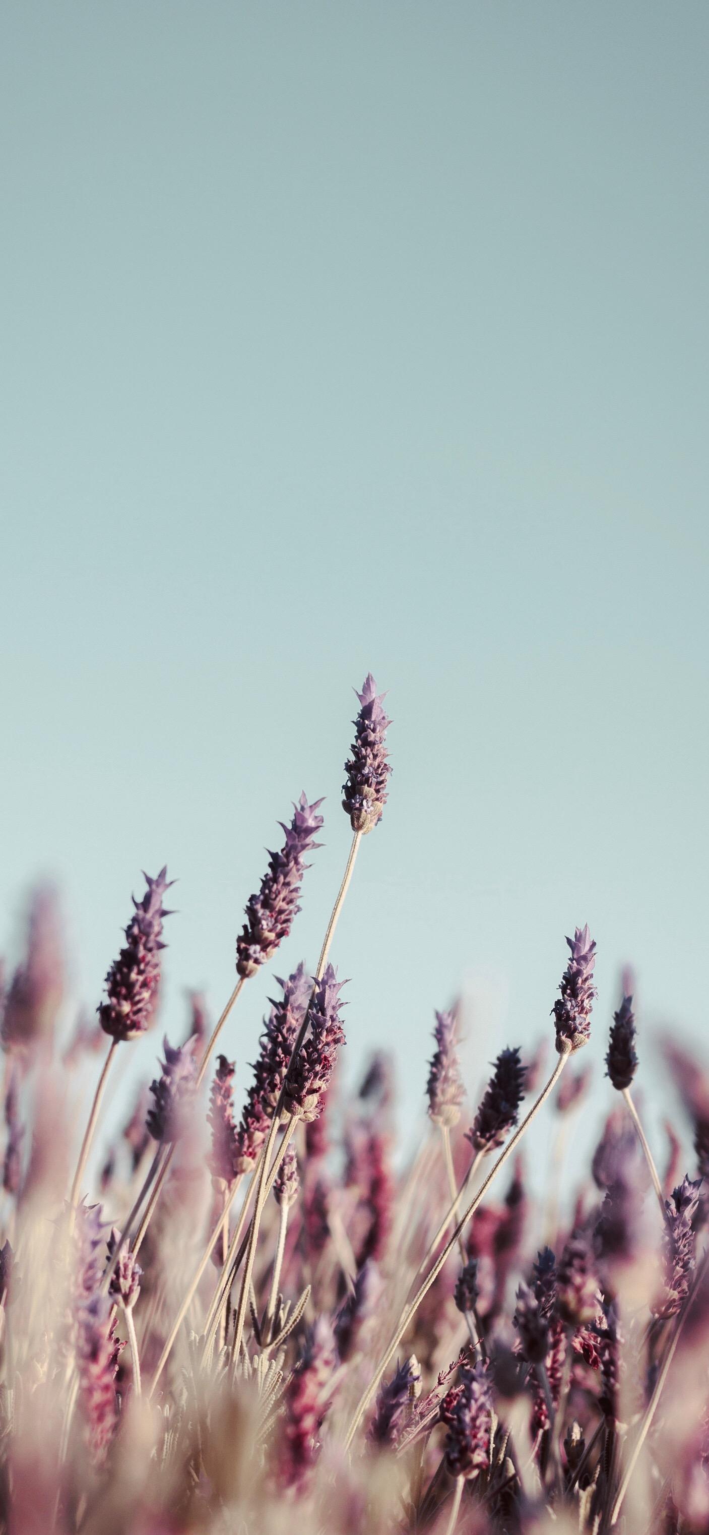 换个视野透过草丛看世界