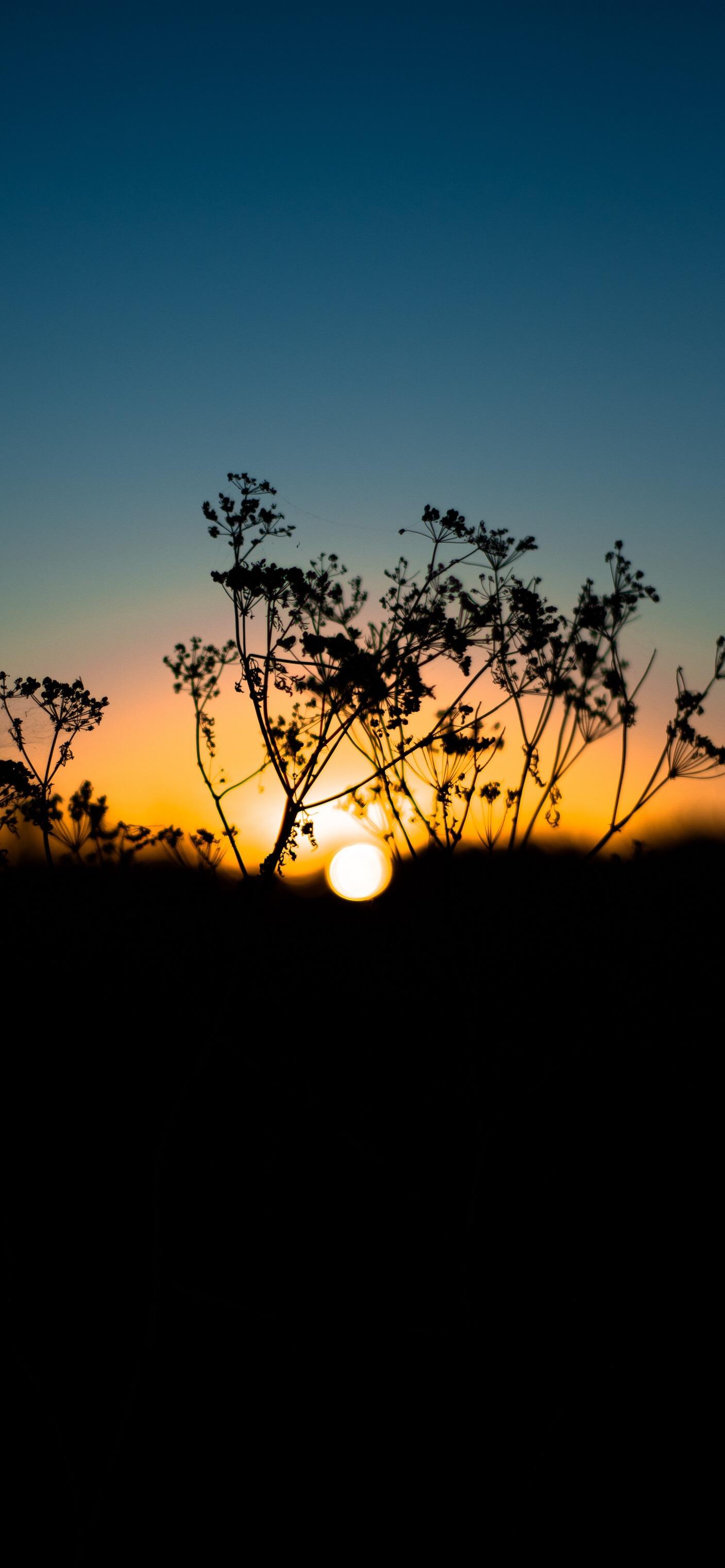 日出东方朝阳把世界点亮,图片尺寸1407*3045