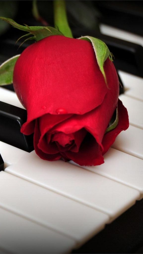 浪漫情人节红色玫瑰高清壁纸
