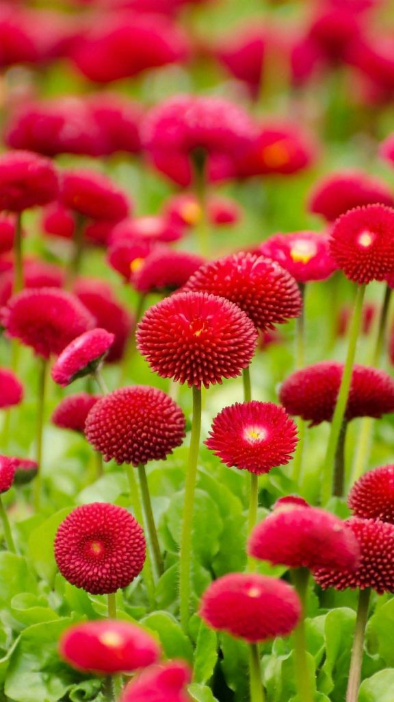 10佳绚丽多彩的花儿壁纸576*1024