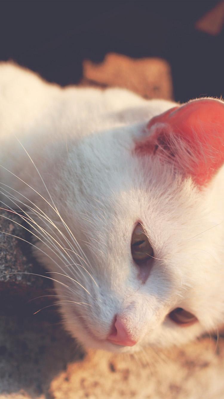 可爱小奶猫猫咪手机壁纸
