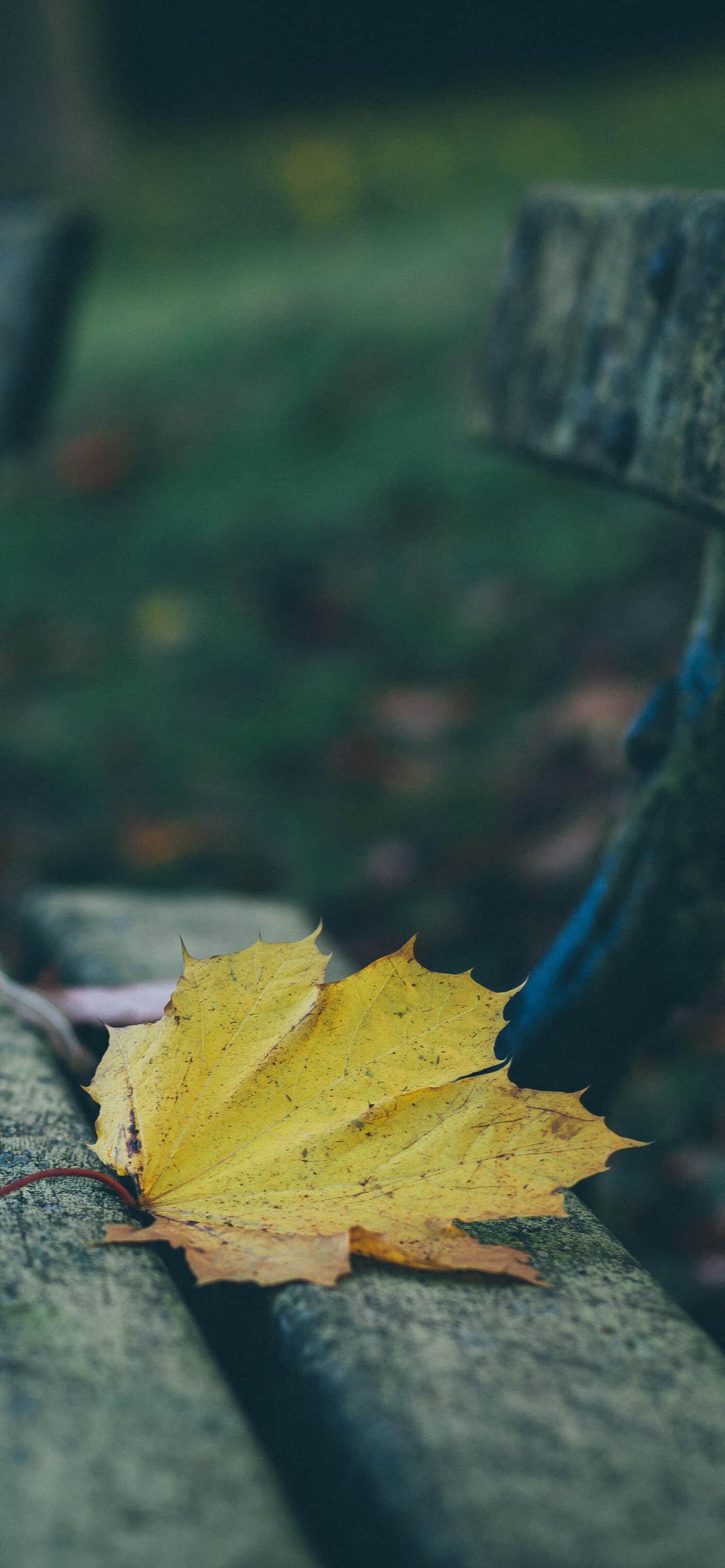 秋季的落叶唯美手机壁纸