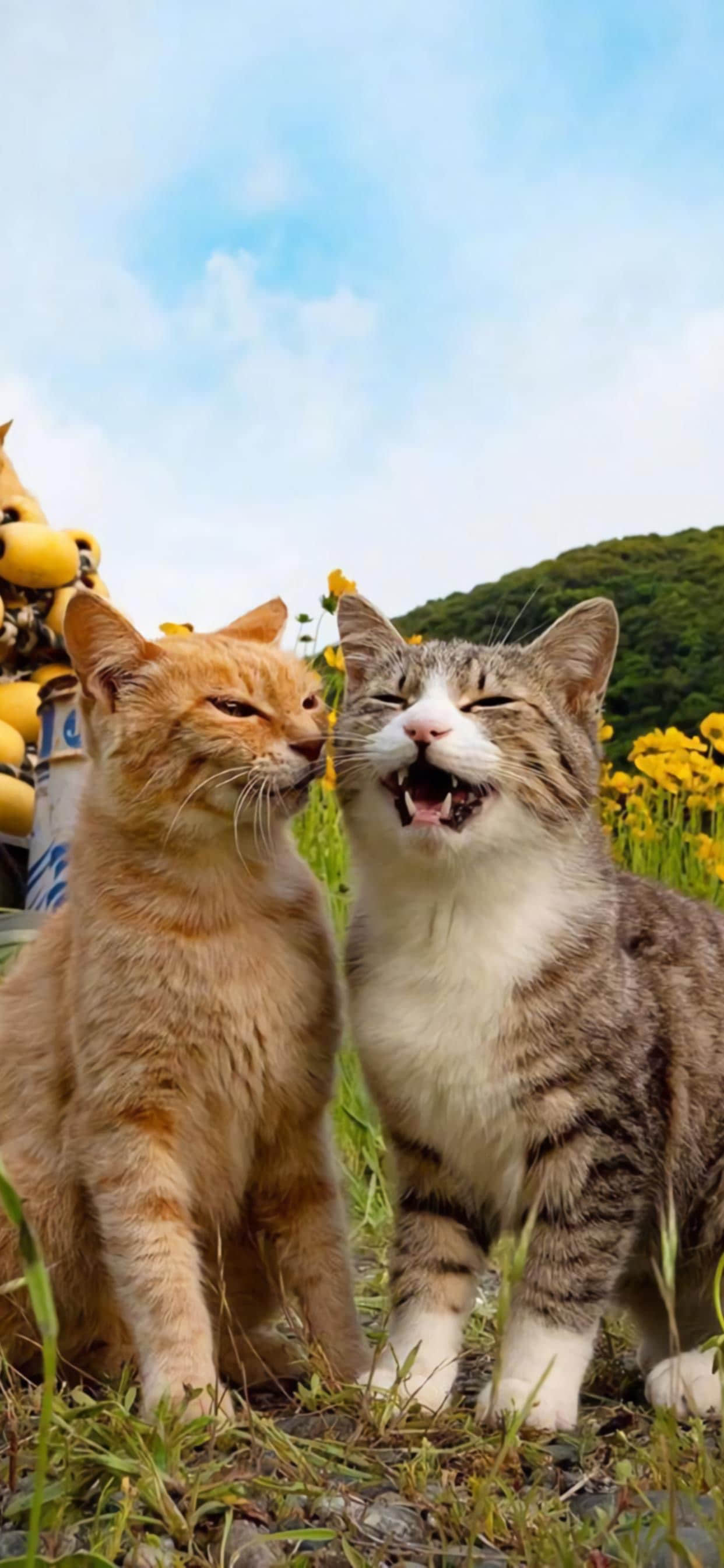 可爱猫咪1242*2688高清手机壁纸