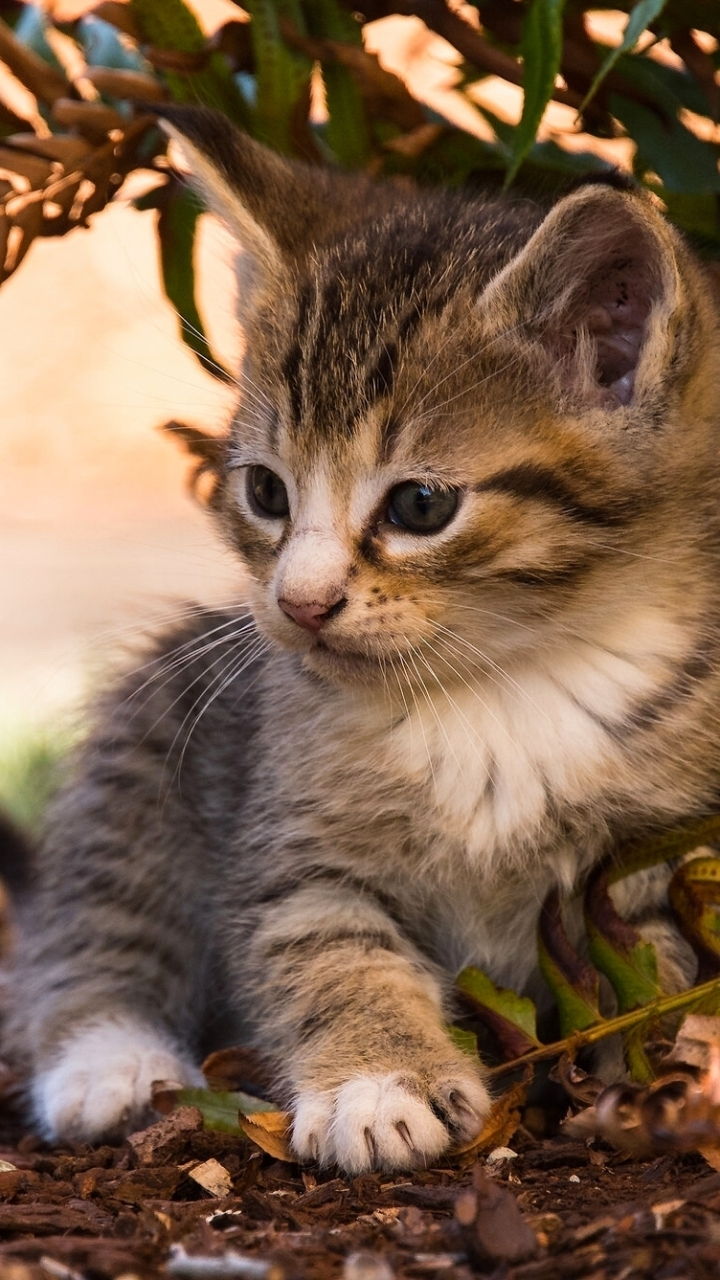 萌萌的可爱小猫咪iPhone手机壁纸9P